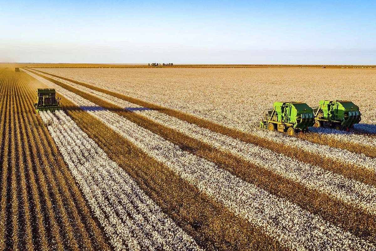 Agronegócio domina ranking das maiores empresas da região Centro-Oeste
